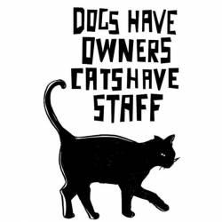 Akril pecsételő 7 x 11 cm - macska-mondás angolul